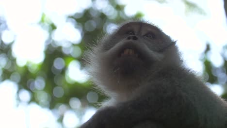 Low-Level-Shot-of-a-Monkey-Face
