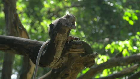 Small-Monkey-Sitting-on-a-Branch