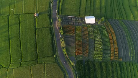 Aerial-Shot-of-Indonesian-Farmland