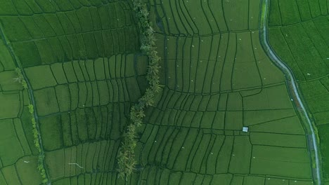 Aerial-View-of-Irrigated-Rice-Paddies