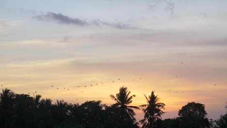 Birds-Flying-Over-Trees-at-Sunset