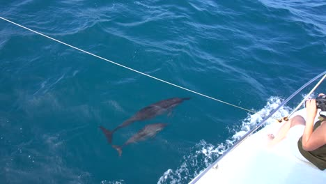 Dolphin-and-Calf-Swimming-Alongside-Boat-1