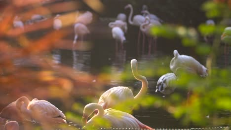Reveal-Shot-of-Flamingos-in-Pond