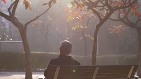 Revelar-la-foto-del-hombre-sentado-en-el-banco-del-parque