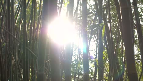 Sun-Shining-Through-Bamboo