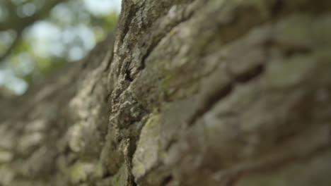 Tracking-Along-Oak-Tree-Bark-01