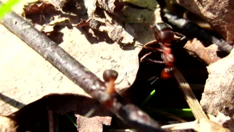 Ants-in-Slow-Motion-CC-BY-NatureClip