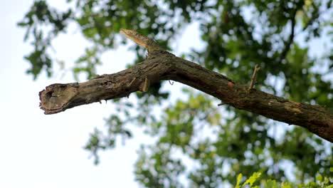 Tree-Branch