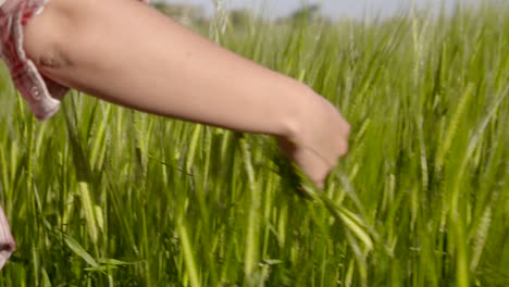 Walking-Through-Barley-Field