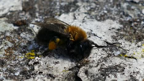 Honey-Bee-Cleaning
