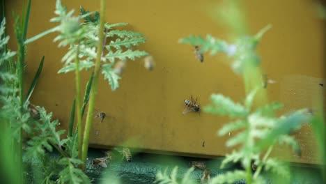 Bees-at-Beehive