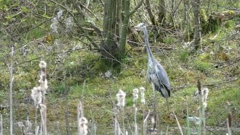 Heron-Standing-next-to-Pond
