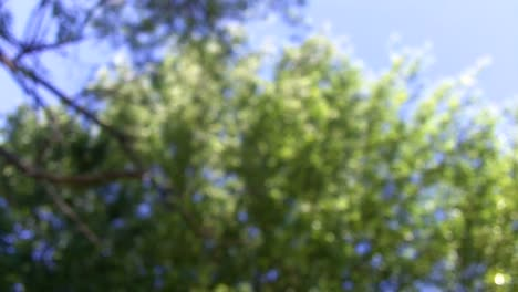 Blurry-Trees-Background