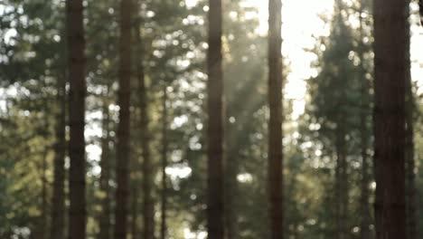 Fondo-de-árboles-borrosos-Loop-1