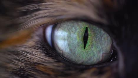 Cat-Eye-Macro-2