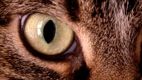 Cat-Eye-Macro