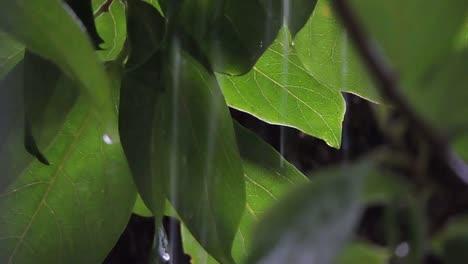 Rain-and-Leaves