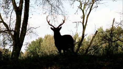 Stag-Silhouette