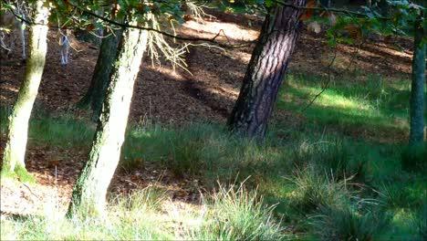 Falloe-Deers-Running