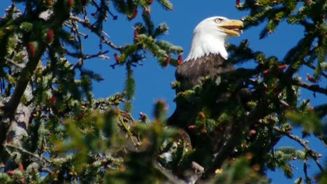 Happy-Eagle-in-Tree