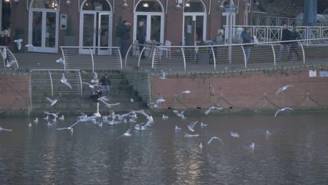 Feeding-Birds-by-the-River