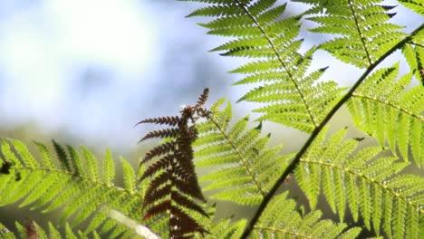 Fern-Tree-in-Sunlight