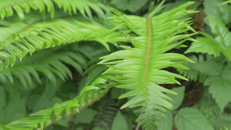 Fern-Plant-Leaves