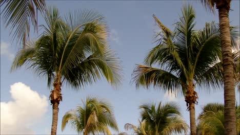 Florida-Palms