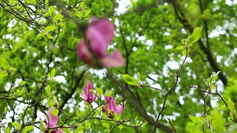 Pink-Flower-on-Tree