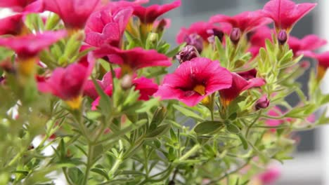 Flower-Blowing-in-Wind