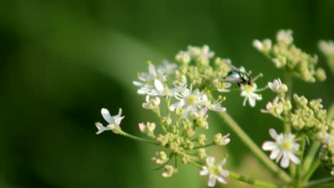 Fly-on-Flowers