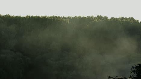 Dense-Fog-Covered-Forest-2