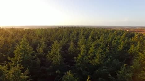 Flying-Over-Forest-1
