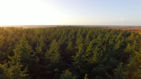 Volando-sobre-el-bosque-1