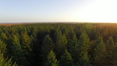 Flying-Over-Forest-2