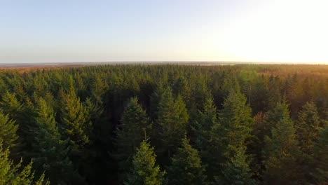 Volando-Sobre-El-Bosque