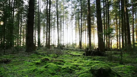 Forest-Floor-Tilt-Up