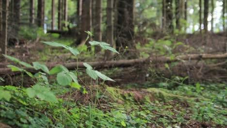 Forest-Scene-Tracking-Shot