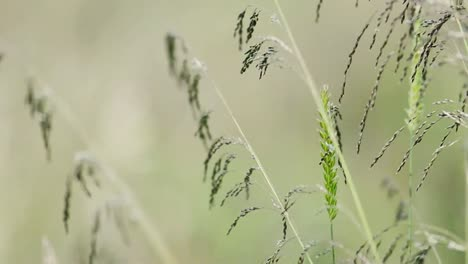 Ornamental-Grasses-Background