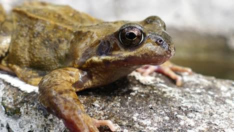 Frog-Close-Up