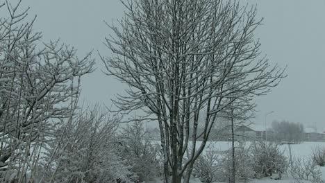 Garden-Winter-4
