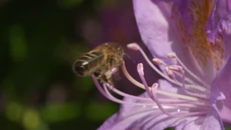 Bee-on-Flower-2