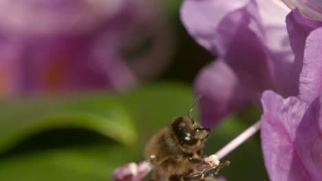 Bee-on-Flower-3