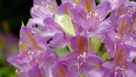Butterfly-on-Flower-1