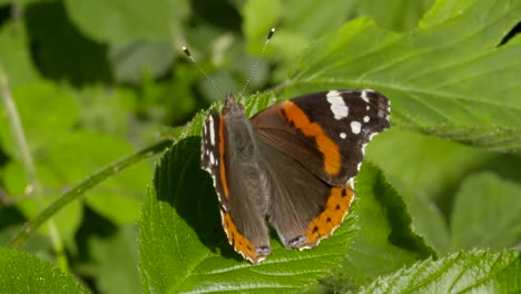 Butterfly-on-Leaf-Close-Up