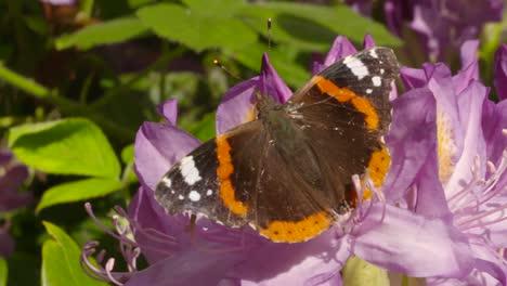 Butterfly-on-Flower-2