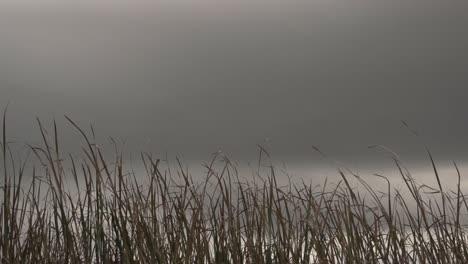 Swamp-Grass-Blowing-