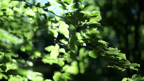 Green-Leaves-in-Sunlight