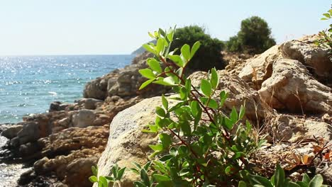 Plant-by-the-Sea-in-Turkey