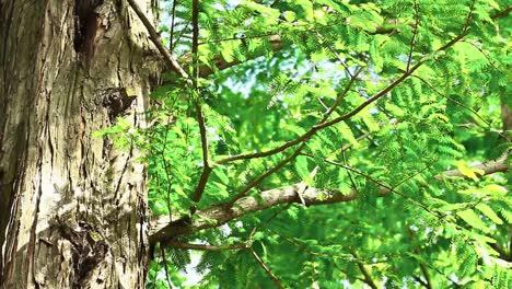 Tree-Branch-